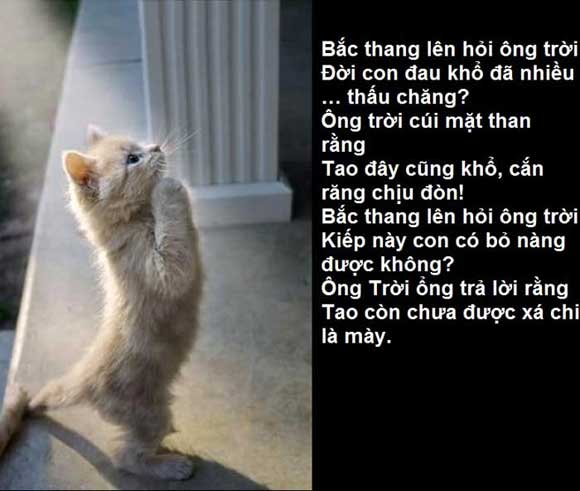 nhung-cau-noi-che-hay-nhat-cuc-kho-do-ve-tinh-yeu-bat-hu-va-hai-huoc-nhat-moi-thoi-dai-8