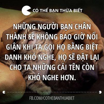 nhung-cau-noi-hay-doc-dao-dam-chat-nhan-van-ve-tinh-ban-bang-hinh-anh-1