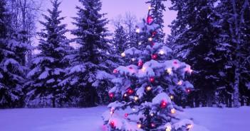 Hình ảnh cây thông đẹp mê hồn cho giáng sinh thêm an lành -3