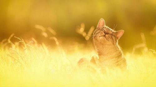 Những lời chúc buổi sáng hay ý nghĩa bằng hình ảnh đẹp đáng để đăng lên tường 17